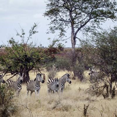 Kruger (Sudáfrica)