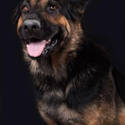cachorro perro adopcion vida con perros asociacion madrid fotografa milena martinez