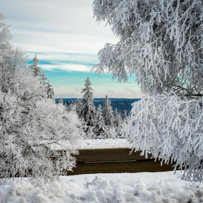 Selva Negra (Alemania)